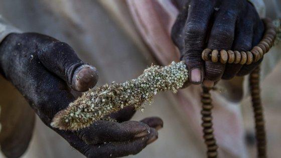 """As três agências pedem """"financiamento urgente"""" à comunidade internacional, de modo a """"evitar uma grave crise alimentar"""""""