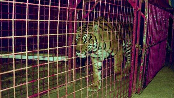 Diploma que estabeleceu o fim do uso de animais de circo foi aprovado no Parlamento em 2018