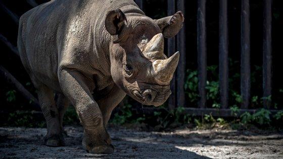 Este projeto permitiu o treino de rangersde parques nacionais e o transporte aéreo e rodoviário de vários especímenes de rinocerontes-negros oriundos de KwaZulu-Natal para o Parque Nacional de Liwonde