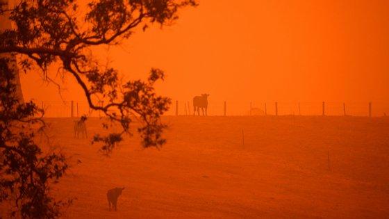 A família estava a acampar numa zona da Austrália que foi afetada pelos incêndios