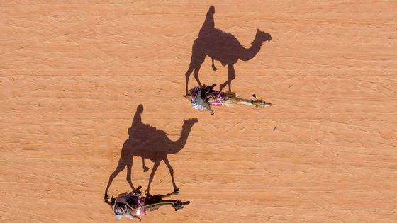 Estima-se que vivam na Austrália cerca de um milhão de camelos