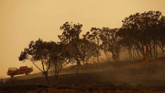 Em média, por ano, menos de 2% das florestas australianas são destruídas devido aos fogos