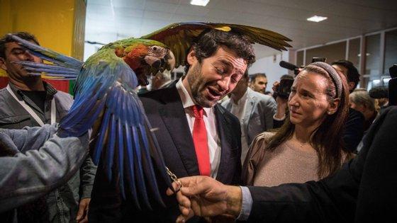 """Distribuiu beijinhos, abraçou militantes e amigos, brincou com a arara Aurora, que por pouco não lhe arrancou a orelha, bateu o pé ao som de """"Estas é que são as saias"""", do grupo popular Verde Maio. É o arranque da campanha presidencial de André Ventura"""