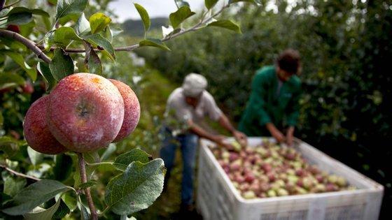 A CAP – Confederação dos Agricultores de Portugal admite fazer proposta ao Governo para que se utilize mão-de-obra local que tenha ficado livre no trabalho agrícola.