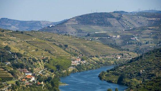 Neste território, os viticultores têm enfrentado vários problemas ao longo dos anos, desde as doenças que afetam a produção, as intempéries ou a seca