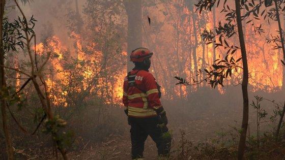 O estado de emergência levou a que a limpeza das matas ficasse para trás, uma preocupação acrescida para a época de incêndios