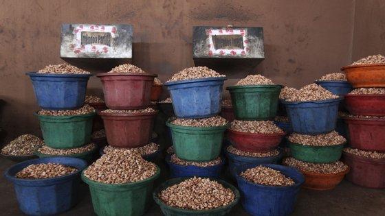 O país produz anualmente cerca de 350 mil toneladas de castanha de caju, embora a exportação não ultrapasse as 200 mil toneladas