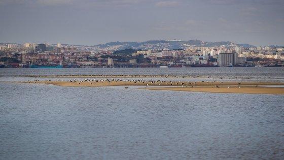 """As associações consideram insuficiente que se tente """"deslocar aves que seriam afetadas e compensar efeitos negativos do aeroporto recuperando áreas marginais da Zona de Proteção Especial"""""""