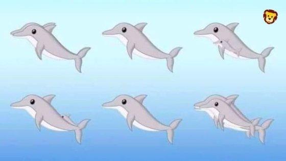 """""""Quantos golfinhos vês?"""": é mais um desafio que está a circular na internet"""