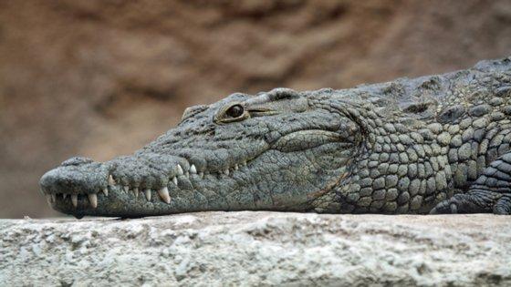 No sábado, a Guarda Civil de Espanha tomou conhecimento de um possível avistamento de um crocodilo do Nilo, com cerca de 250 quilos