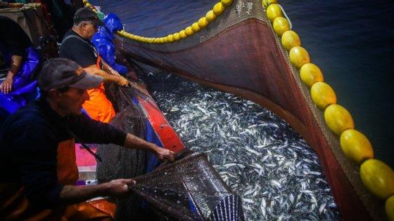 """Em causa, segundo as ONGA, está """"a grande vulnerabilidade das espécies e habitats do mar profundo"""""""
