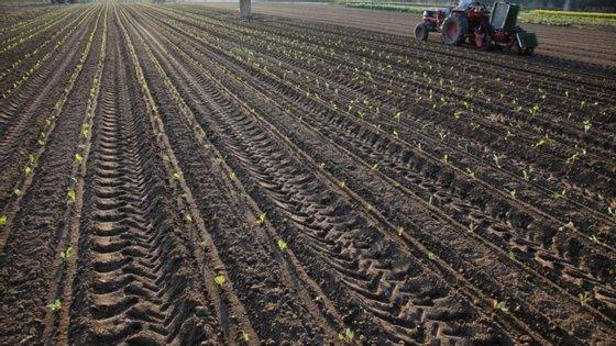 Ao nível regional as áreas agrícolas apresentaram um saldo positivo em todas as regiões do Continente e nas regiões Centro, Alentejo e Algarve