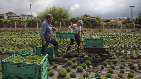 O maior produtor desta planta na região acredita que vai vender cerca de 40 mil vasos