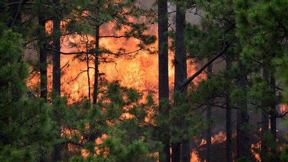 """Segundo a PJ, o foco de incêndio """"colocou em perigo uma mancha florestal"""" e várias habitações"""