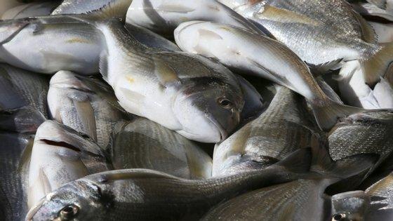 """Segundo o investigador, o stress """"provocado na morte"""" leva """"à libertação de hormonas quetransformam o sabor e a textura da sua carne"""", o que já não acontece """"num peixe que morra rapidamente e sem sofrimento""""."""