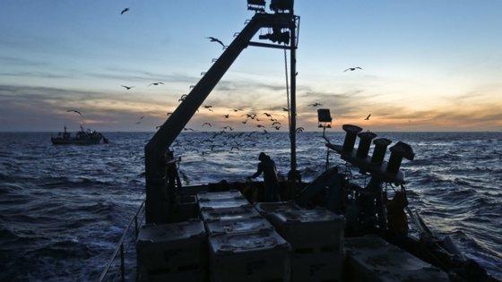 A WWF pretende que os responsáveis pelas políticas da UE alterem o Regulamento Europeu de Controlo das Pescas