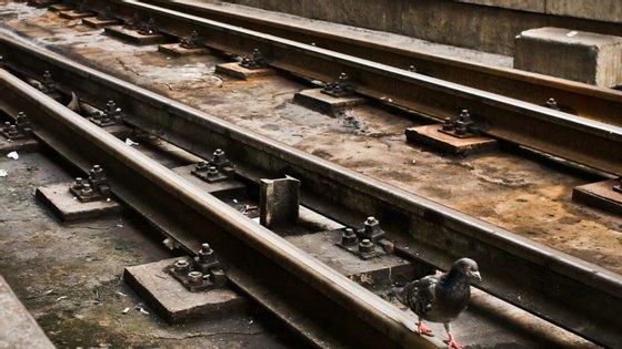 Modernização da ligação ferroviária entre Sines e Linha do Sul com investimentos na ordem dos 40 ME
