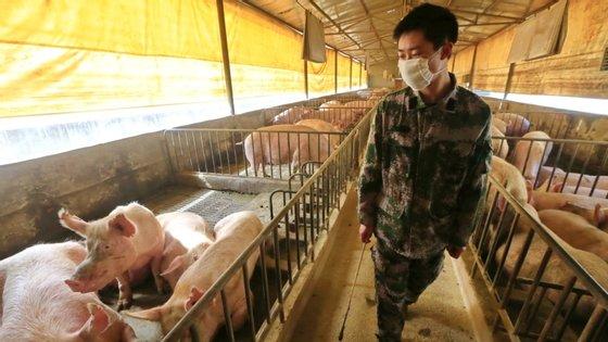 Os vírus, detetados por cientistas de universidades chinesas e do Centro de Prevenção e Controlo de Doenças da China, foram designados G4, descendem geneticamente da estirpe H1N1