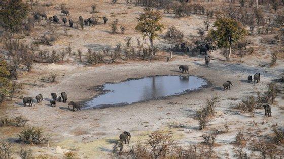 O governo do Botsuana ainda não testou amostras, não sendo ainda conhecidas as causas das mortes ou se haverá qualquer tipo de risco para a saúde pública