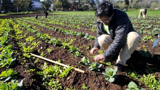 As autoridades regionais estimam que cerca de 12% da população, num universo de 267.785 habitantes (Censos 2011), trabalha no setor agrícola