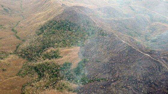 Houve uma perda de 10% da vegetação nativa da floresta amazónica nestes últimos 33 anos