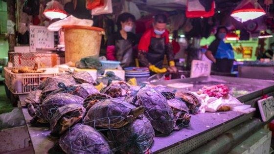 Pequim vai reforçar a punição do comércio e consumo ilegais de animais selvagens