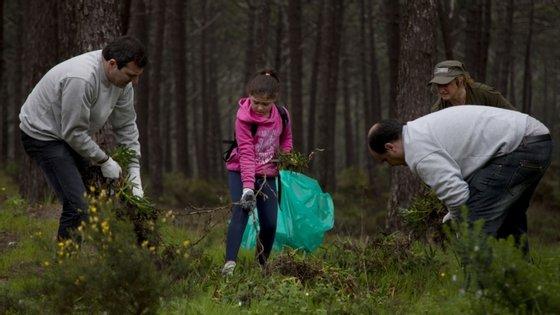 Este ano, a GNR registou cerca de 24 mil incumprimentos relacionados com a limpeza da floresta