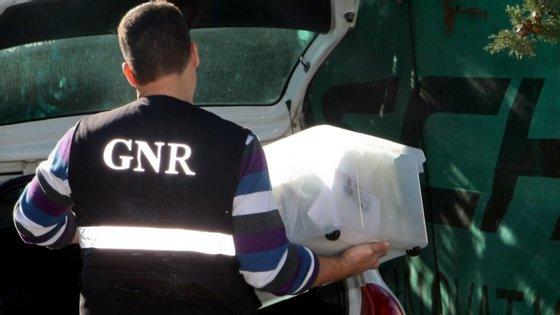 Segundo referiu a GNR, em comunicado, as plantas foram colhidas no terreno onde o suspeito as cultivava e as armas foram detetadas aquando da busca domiciliária, tendo sido apreendidas por não estarem documentadas
