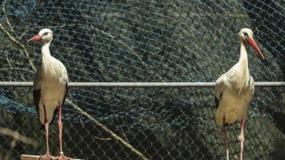 Os Centros de Recuperação de animais selvagens da Quercus integram a Rede Nacional de Centros de Recuperação de Fauna
