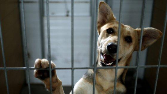 A responsabilidade sobre o bem-estar dos animais de companhia está sob a tutela da Direção-geral de Alimentação e Veterinária