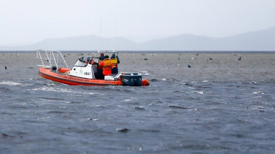 As baleias foram encontras encalhadas numa baía da Tasmânia na segunda-feira, sendo o pior incidente deste tipo no país