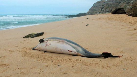 Os Bombeiros Sapadores de Vila Nova de Gaia chegaram ao local deparando-se com o animal já morto