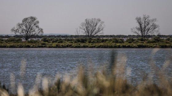 O GEOTA sustenta que deve ser feita uma aposta no cultivo de espécies autóctones que não exigem irrigação