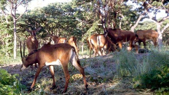 Angola controla 13 áreas de conservação ambiental