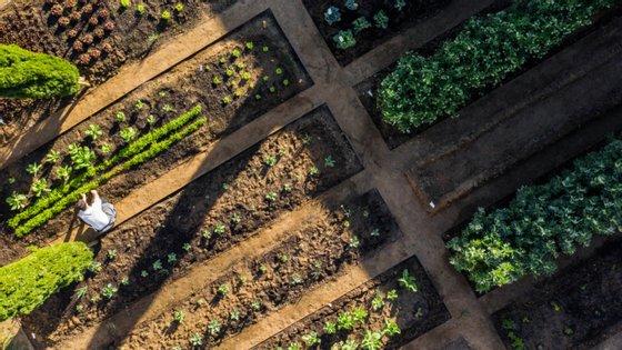 Desde que Carlos ocupou o espaço dechef principal, a horta da Herdade aumentou e quase tudo o que se cozinha vem de lá.