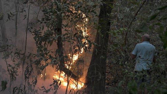 Os dados oficiais divulgados pelo Governo brasileiro também mostraram que 964 quilómetros de floresta amazónica foram devastados só em setembro