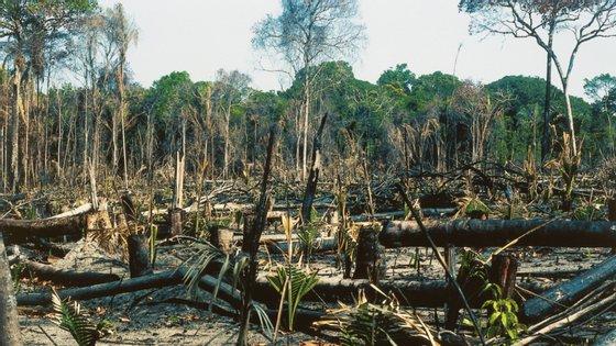 Apesar de ter grande parte dos ecossistemas intactos, a desflorestação da Amazónia pode colocar o Brasil em risco
