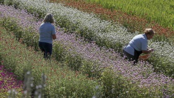 Também no âmbito do processo de recuperação do CTA de Tavira, poderá surgir uma parceria com a autarquia local para a criação de uma horta comunitária, informou