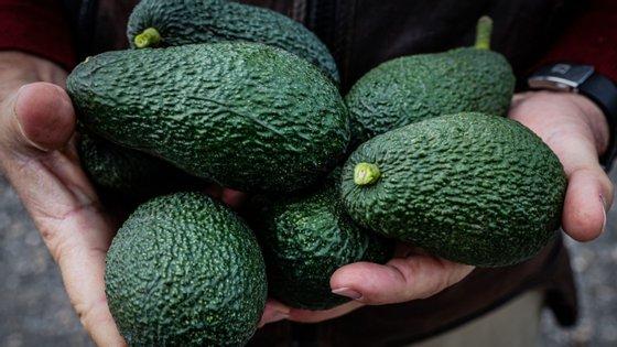 Ao longo dos últimos anos o negócio dos abacates tem sido comparado ao dos diamantes de sangue.