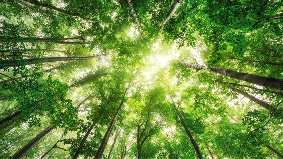 O estudo defende ainda que ao mesmo tempo que seria absorvido quase metade do carbono acumulado na atmosfera desde a Revolução Industrial
