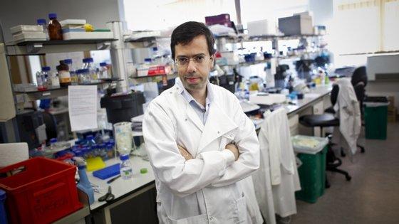 Luís Moita, investigador do Instituto Gulbenkian de Ciência (IGC)