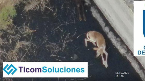 Outras das preocupações das autoridades locais consiste em conseguir salvar os animais domésticos
