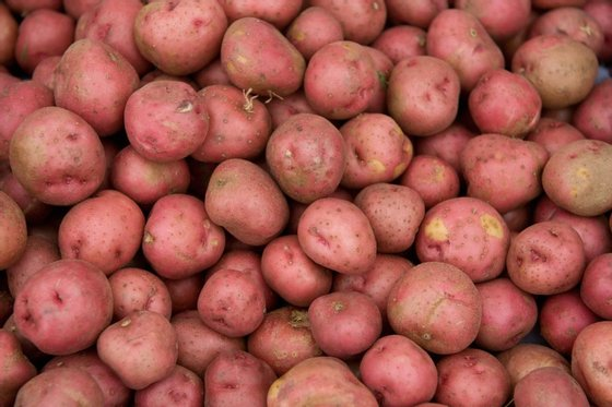 Red potatoes are offered for sale at Eastern Market on Capitol Hill in Washington, DC, on June 27, 2008. According to a survey released on June 26, nearly a quarter of Americans are cutting back their spending on food and healthcare thanks to rising fuel prices. AFP PHOTO/SAUL LOEB (Photo credit should read SAUL LOEB/AFP/Getty Images)