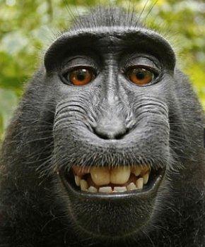 Macaco1