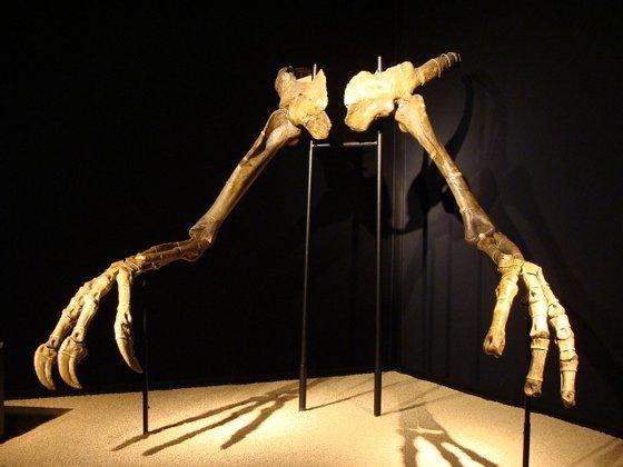 Deinocheirus mirificus_Eduard Solà_Wiki